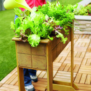 saladbox-diy-main-m