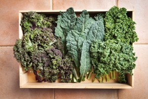 Crate of Freshly Harvested Kale Vegetable Varieties Hz